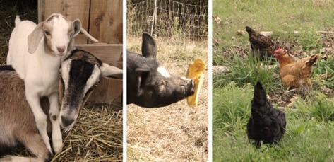 farm_animals2