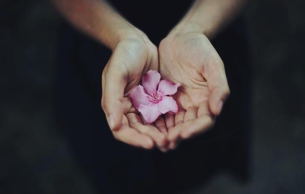 ruki-cvetok-lepestki